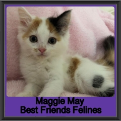 2019 - Maggie May
