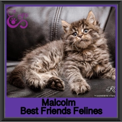 2019-Malcolm