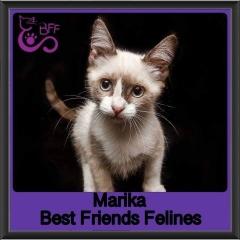 2019 - Marika