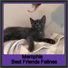 2019 - Memphis