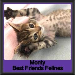 2019-Monty
