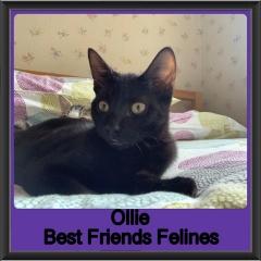 2019-Ollie