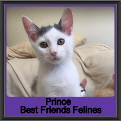 2019-Prince