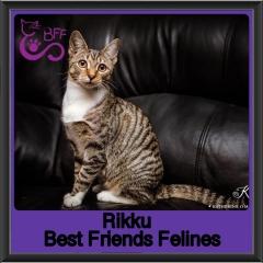 2019-Rikku1
