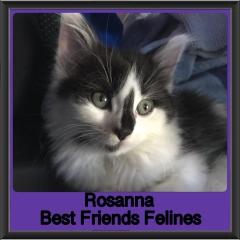 2019 - Rosanna