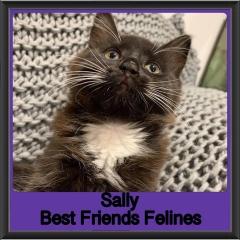 2019 - Sally