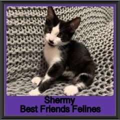 2019 - Shermy