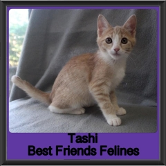 2019 - Tashi