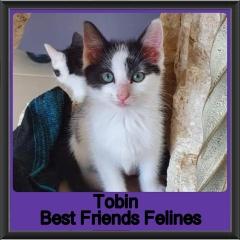 2019-Tobin
