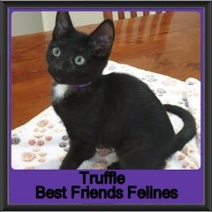 2019-Truffle1