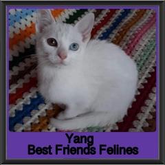2019-Yang