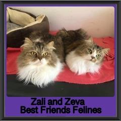 2019-Zali-and-Zeva