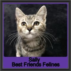 2019-Sally
