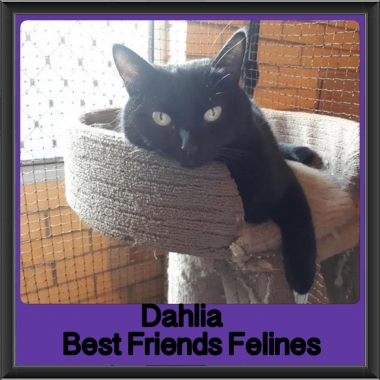 2018 - Dahlia