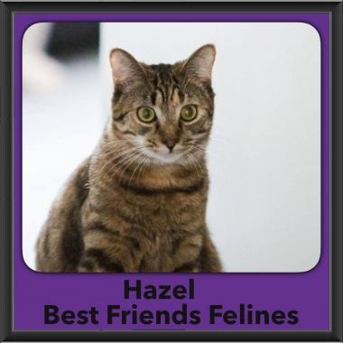 2018 - Hazel