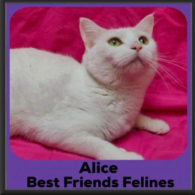 2020-Alice