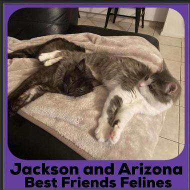 2020-Jackson-and-Arizona