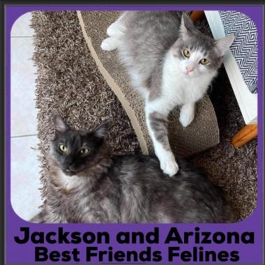 2020-Jackson-and-Arizona2