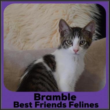 2021-Bramble