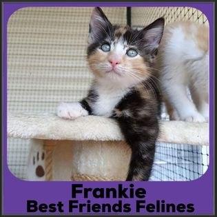 2021-Frankie