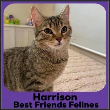 2021-Harrison