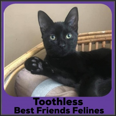 2021-Toothless3